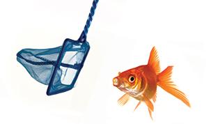 is_11600785_fishnet
