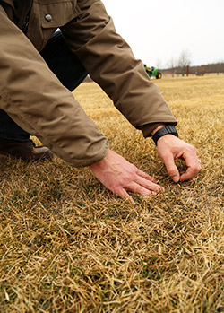 Scouting-for-weeds-in-early-spring-250x349