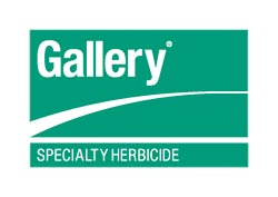 Dow Gallery