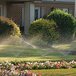 Irrigating lawn